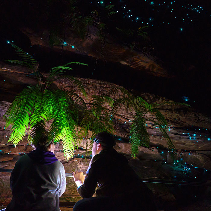 Blue Mountains Glow Worm Tours